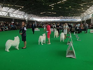 World Dog Show, Amsterdam, 2018 - 14.JPG