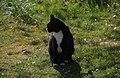 Wraxall 2012 MMB 14 Smudge.jpg