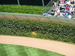 Wrigley Field - Wrigley's distinctive ivy-covered outfield walls in 2006
