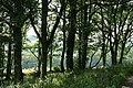 Yarcombe, copse by the lane to Fry's Moor - geograph.org.uk - 206364.jpg