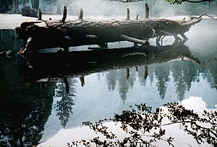 Yosemite Fallen Tree.jpg