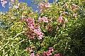 Zafra - blossom (13350144085).jpg