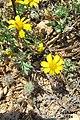 Zakynthos flora (35743858522).jpg