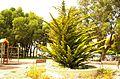 ® M.D. EL CAMPELLO MUCHAVISTA PLAZA D'ALCALAS - panoramio (4).jpg