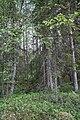 Överbo urskog.jpg