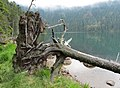 Černé jezero (3).jpg