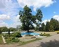 Ботанічний сад Подільського державного аграрно-технічного університету 03.jpg