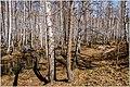 Весна на Южном Урале. - panoramio (3).jpg