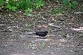 Голосіївський ліс Шпак DSC 0601.jpg