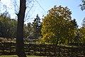 Комора з Бориспільського району.jpg