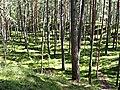Лес в окрестностях Лиласте - panoramio.jpg