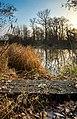Меланхолія осіннього ранку.jpg