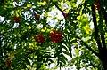 Минск, Ботанический сад. - panoramio.jpg
