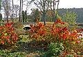 Осінь в Олександрії.jpg