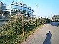 Парк Вічної Слави горобини-символ викривленої війною людських доль....JPG