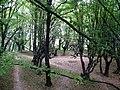 Парк з парковими спорудами 17-18 ст. с.Підгірці.JPG