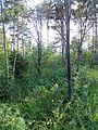 """Парк шума """"Гази Баба"""" 66.jpg"""