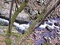"Резерват ""Стара река"" 10.jpg"