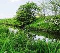 Річка Гнізна. На території заказника Велике болото 03.jpg