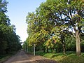 Сестрорецкий парк Дубки. Главная аллея. - panoramio.jpg