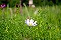 Цветы ботанического сада. - panoramio (4).jpg