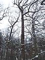 Чернечий Ліс 23.jpg