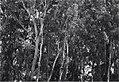"""בן שמן - יער הקק""""ל-JNF034948.jpeg"""