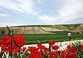 دشت شقایق حسین آیباد کالپوش، مجید در پی سوژه Red, Green, Blue - panoramio.jpg