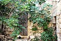 صورة رائعة لشجرة تين حول بيت قديم في القرية.jpg