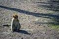 مجموعه عکس از رفتار میمون ها در باغ وحش تفلیس- گرجستان 18.jpg