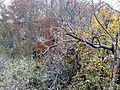 پاییز - panoramio.jpg