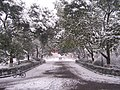 中大路 - panoramio.jpg