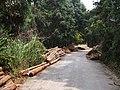 伐木场 - Logging Site - 2014.03 - panoramio.jpg