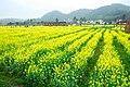广州最美乡村—红山村 - panoramio (45).jpg