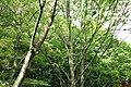 東高根森林公園 - panoramio (53).jpg