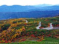 錦秋の乗鞍エコーライン (Autumn Colored Norikura Echo Line Expressway) 07 Oct, 2012 - panoramio.jpg
