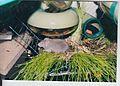 022 Brigit in her garden on 24 July 2002 - fast evolutionary leap.jpg