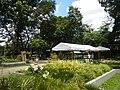 05704jfMidyear Orchid Plants Shows Quezon Cityfvf 18.JPG