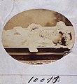 10013 - 01, Acervo do Museu Paulista da USP.jpg