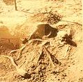 105 Musée préhistoire Carnac.jpg
