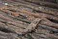 14-11-15-Ausgrabungen-Schweriner-Schlosz-RalfR-042-N3S 4025.jpg
