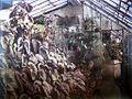 1860 - 1913 serre d'orchidées et bégonias de Louis Cailletet.JPG