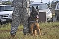 2010 Hawaiian Islands Working Dog Competition DVIDS342915.jpg