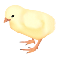 201109 chicken.png