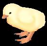 201109 chicken.png