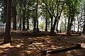 2013, Foresthill Community Cemetery - panoramio (4).jpg