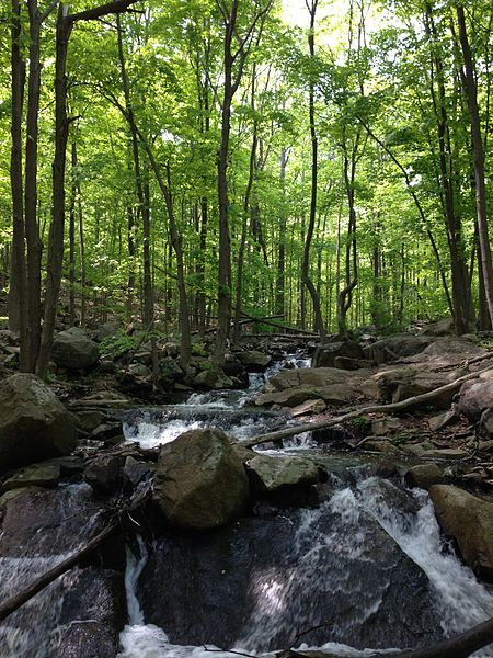 File:2013-05-12 15 13 19 View up the rocky stream along the MacEvoy Trail at around 430 feet in Ramapo Mountain State Forest.jpg