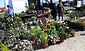 2015-02-09 Algoz gipsie market (3).jpg