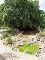 2015-05-27 Paris, Jardin des plantes 19.jpg