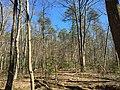2016-03-01 13 00 27 Forest within Fred Crabtree Park in Reston, Fairfax County, Virginia.jpg